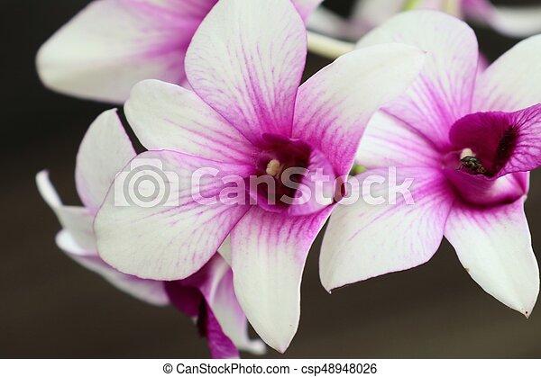 Orquídea - csp48948026