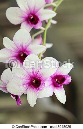 Orquídea - csp48948029