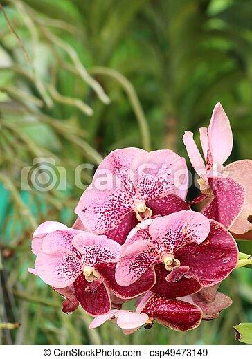 Orquídea - csp49473149