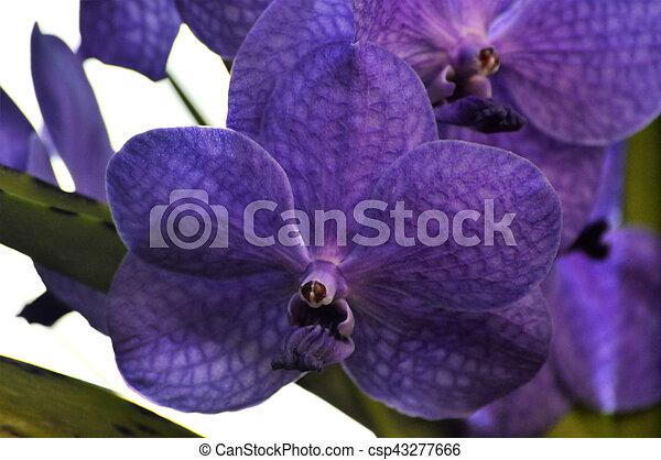 Orquídea - csp43277666