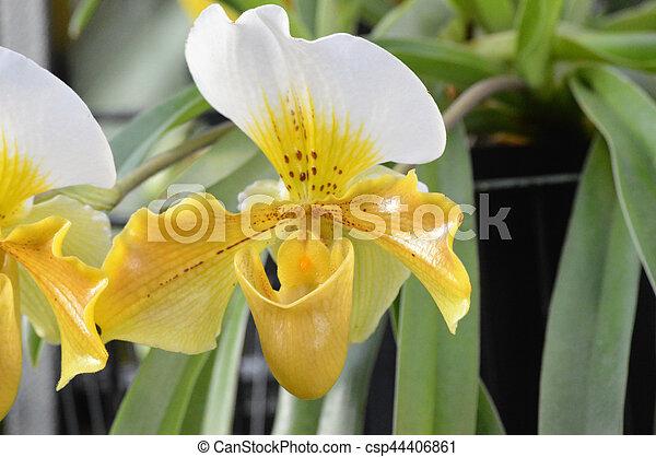 Orquídea - csp44406861