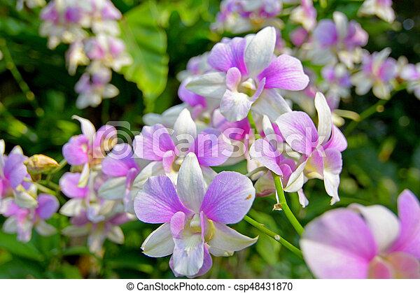 Orquídea - csp48431870