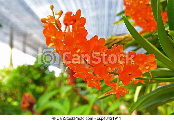 Orquídea - csp48431911