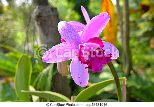 Orquídea - csp48431916