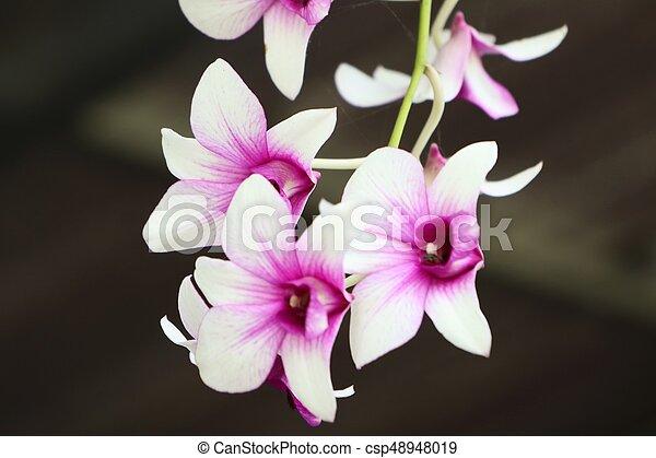 Orquídea - csp48948019