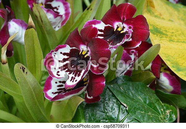 Orquídea - csp58709311