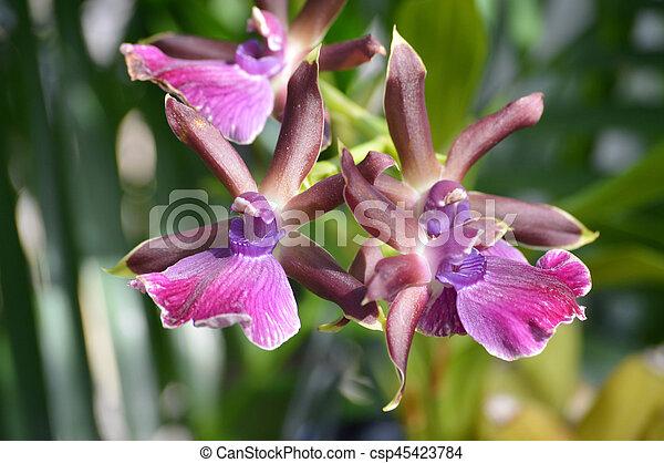 Orquídea - csp45423784