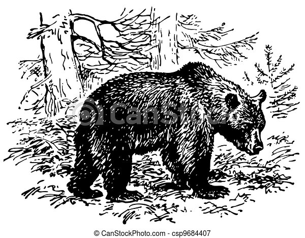 orso marrone - csp9684407