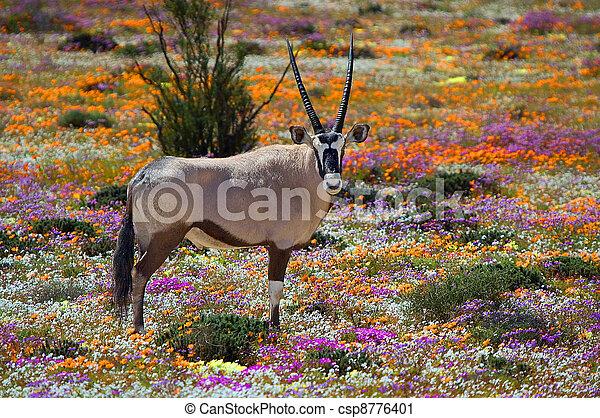 Oryx between flowers - csp8776401