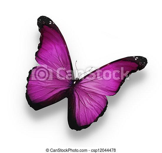 mariposa violeta oscura, aislada en blanco - csp12044478