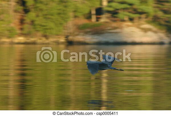 Osprey in Flight - csp0005411