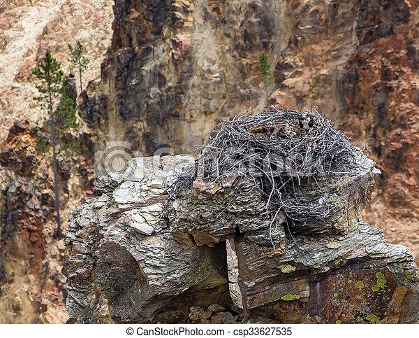 Osprey Nest - csp33627535