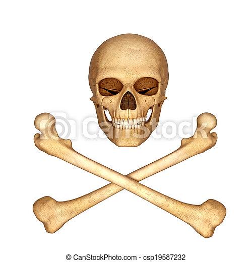 ossa, cranio, 3d - csp19587232