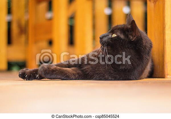 ostatní, temný devítiocasá kočka, ležící, terasa, dno - csp85045524