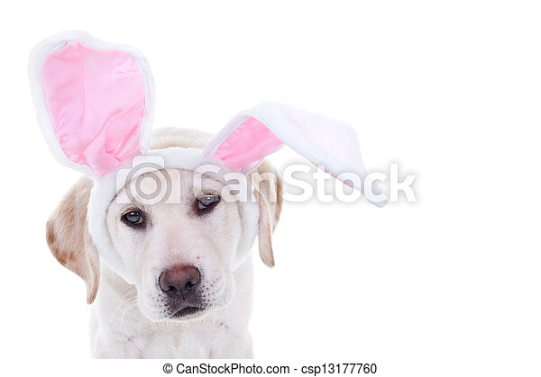 osterhase, hund - csp13177760