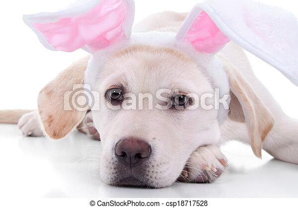 osterhase, hund - csp18717528