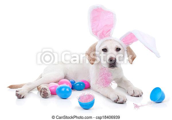 osterhase, hund - csp18406939