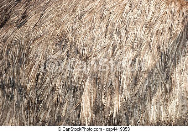 ostrich bird feather brown - csp4419353