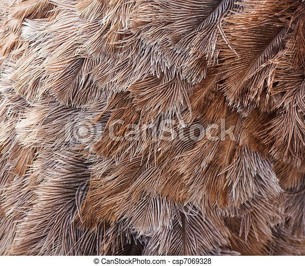 Ostrich bird feather brown texture background  - csp7069328