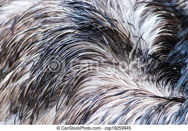 Ostrich feather background. - csp19259945