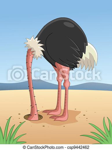 Ostrich hiding head in sand - csp9442462