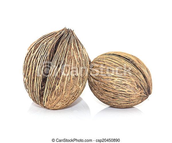 Othalanga - Suicide tree seed - csp20450890