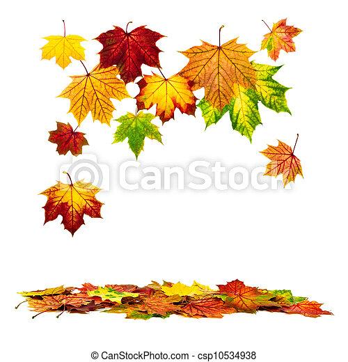 otoño, abajo, hojas, caer, colorido - csp10534938