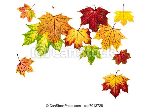 otoño, abajo, hojas, caer, colorido - csp7013728