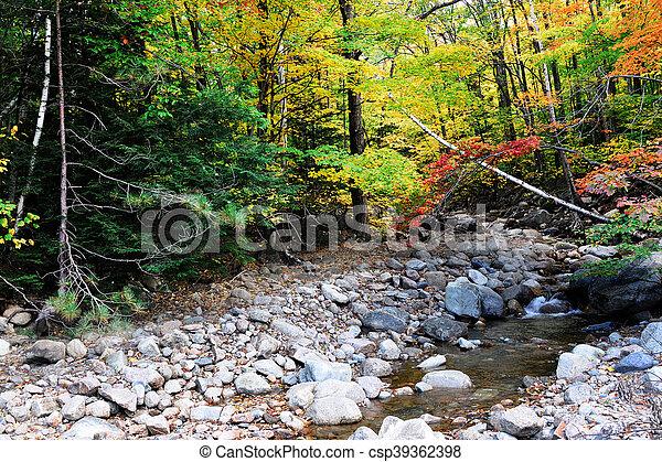 Brook y colorido bosque de otoño - csp39362398