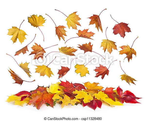 otoño, caer sale - csp11328480