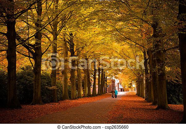 Colores de otoño en el bosque - csp2635660
