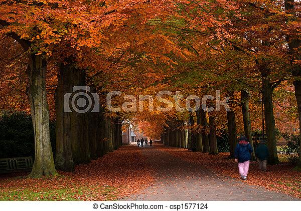 Colores de otoño en el bosque - csp1577124