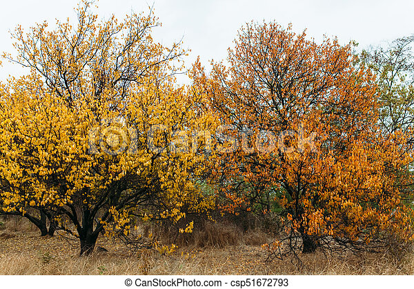 otoño - csp51672793