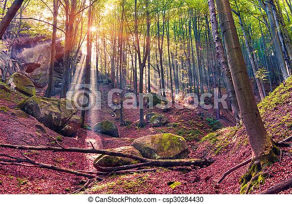 Mañana de otoño en bosques místicos. - csp30284430