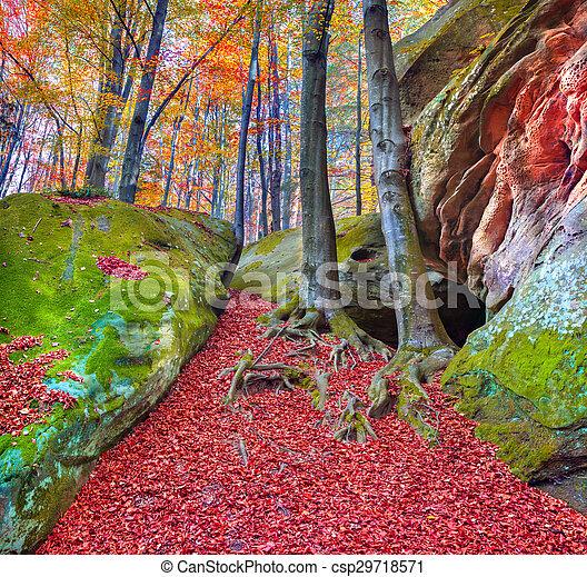 Colorida mañana de otoño en el bosque de la montaña - csp29718571