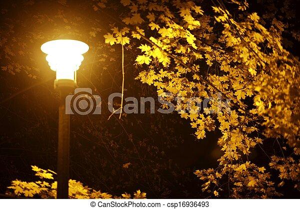 Noche de otoño en el parque - csp16936493
