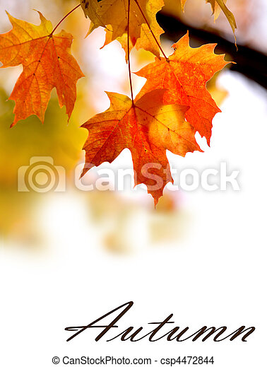 Un fondo de otoño - csp4472844