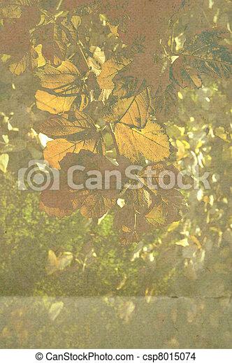 otoño, plano de fondo - csp8015074
