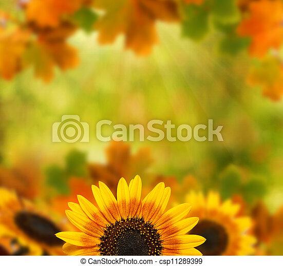 otoño, plano de fondo - csp11289399