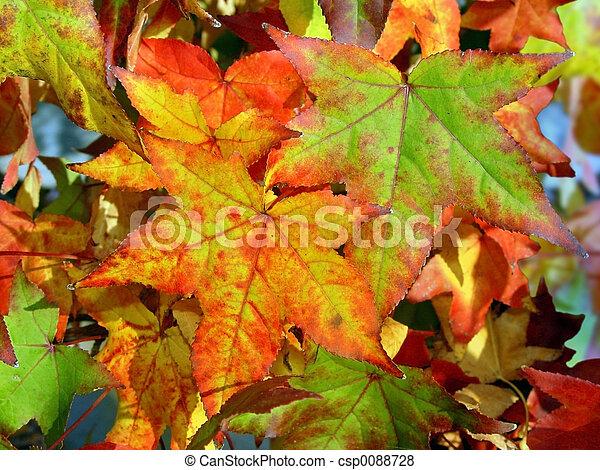 otoño, plano de fondo - csp0088728