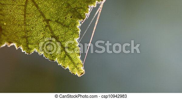 otoño, plano de fondo - csp10942983