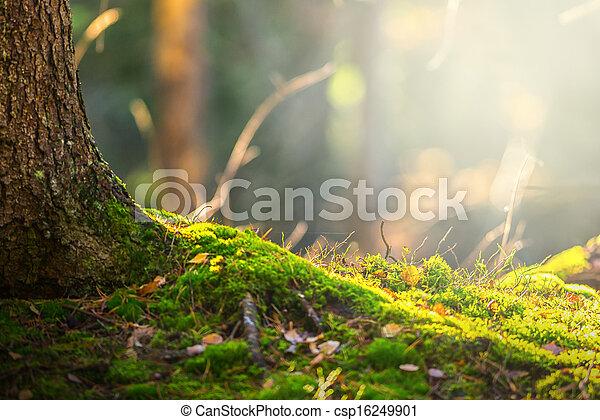 Piso del bosque en otoño con un rayo de luz - csp16249901
