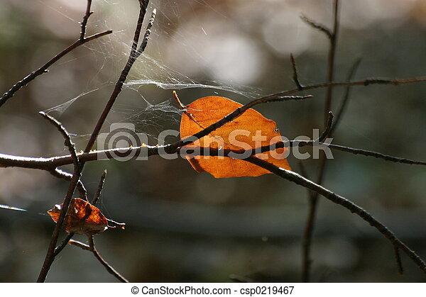 otoño - csp0219467