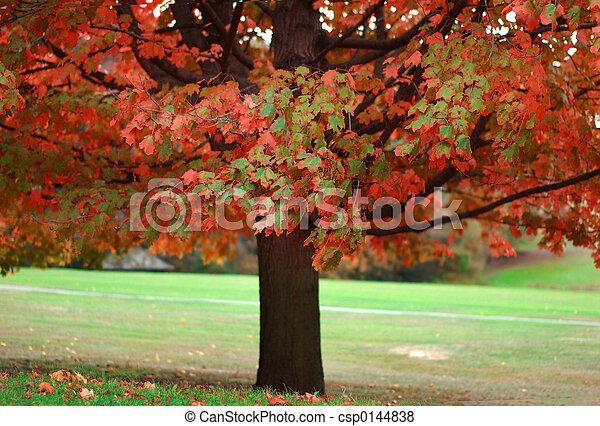 otoño - csp0144838