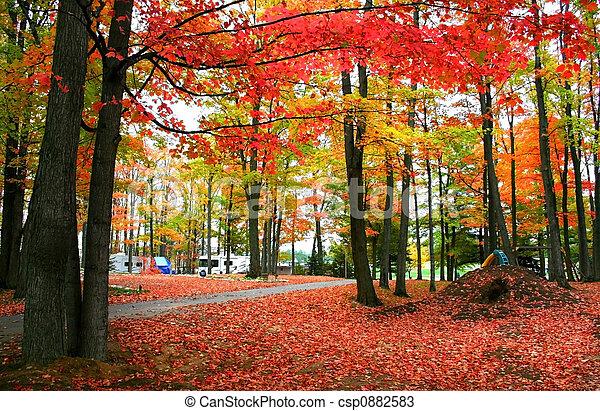 otoño, rojo - csp0882583