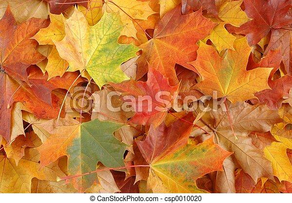Hojas de otoño - csp0010020