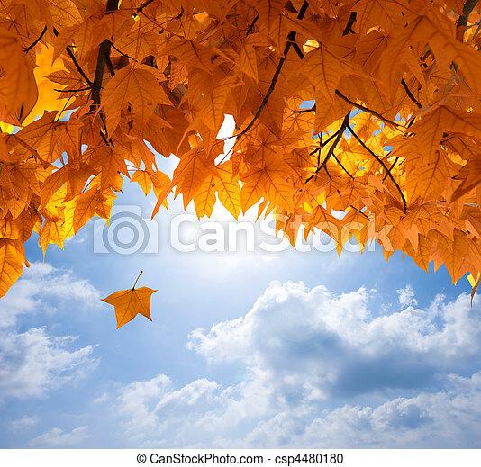 Las hojas de otoño - csp4480180