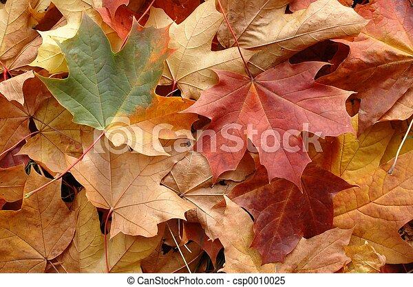 Las hojas de otoño - csp0010025