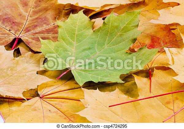 Las hojas de otoño - csp4724295