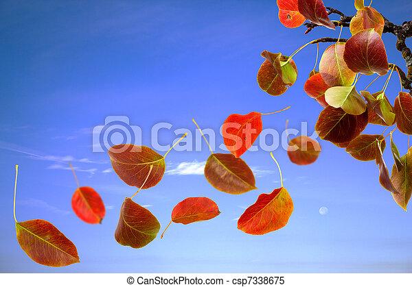 otoño sale, caer - csp7338675